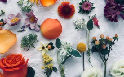 A hagyományos, illetve Natúr és Bio kozmetikumok